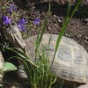 Top Ten Tips For Happy Tortoises. - last post by mildredsmam