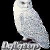 lylytop