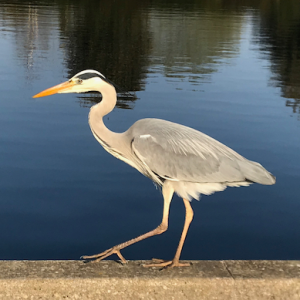 Profile picture for Hiromut Edgar Koistinen
