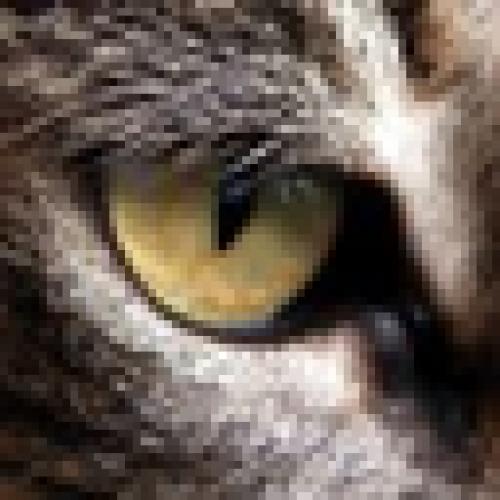 piotao profile picture