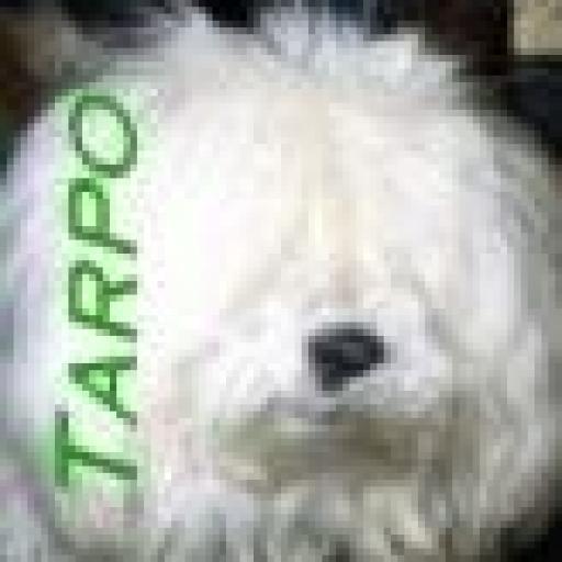 Tarpo's picture