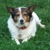 Wiccaweys 1st Ever Agility Show - Saturday 6th September. - last post by wiccaweys