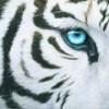 Bulgarian CS 1.6 Servers - Dedihost - last post by val4o0o0