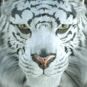 Profile picture for Lino Grandi