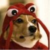 Orthorf's avatar
