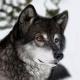 FoxtrotNine's avatar