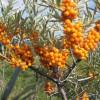 tort fructe fara gelatina - ultimul post de ana_elena