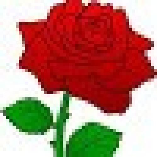 ghambarZAI profile picture
