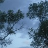 roboshadowscale's Photo