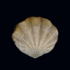 Fossil News would like to t... - last post by Wendell Ricketts