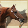 Marketing Proposal for Showcasing Photos for Saddlework - last post by gothcowboy