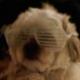 clra2's avatar