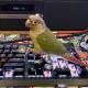 Kareemroks101's Avatar