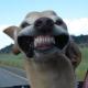 MCFUser69325's avatar