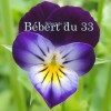 bebert du 33