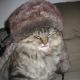 Gengurr's avatar