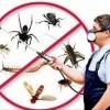 Clarks Pest Control