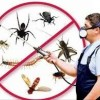 Pest Control TX