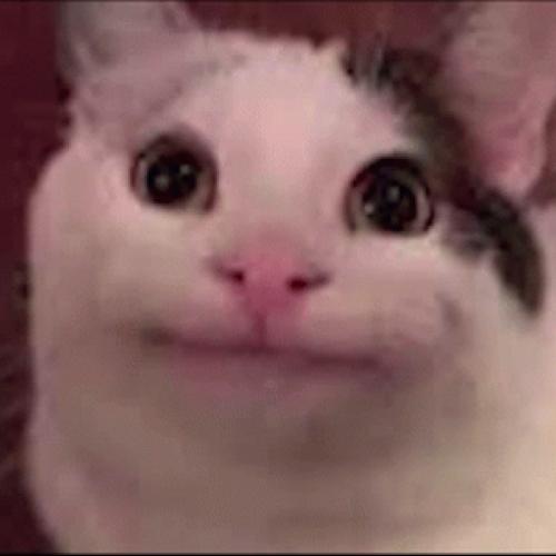 BluTheDogo profile picture