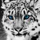 AlfaNerd's avatar