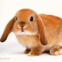 bunny03's Photo