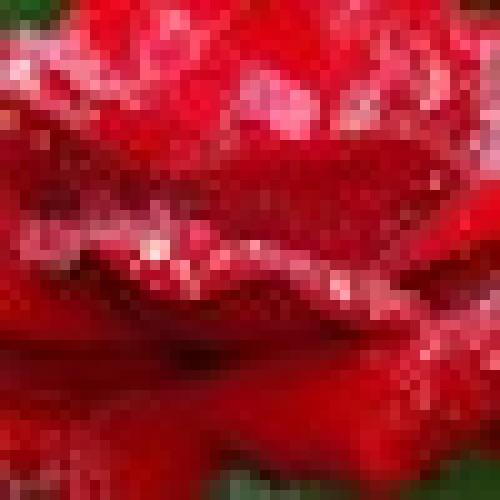 Aditi profile picture