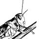 gregaria's avatar