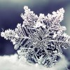 AN ACT OF DISAPPEARANCE (Literary Fiction) - last post by SnowGlobe