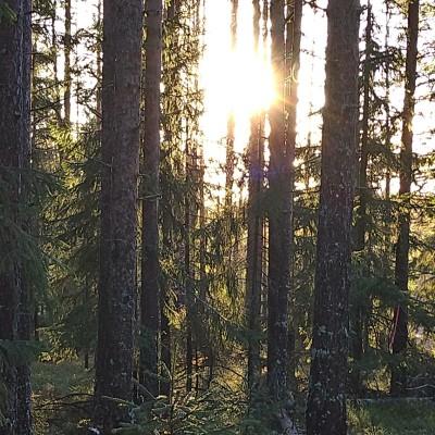 Profile picture of Linda Halme Storm