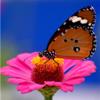 gabypmatias avatar
