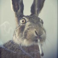 rabbiteggs