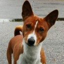 GhostBasenji