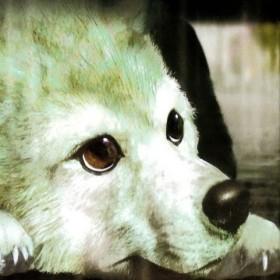 Vixzer's avatar