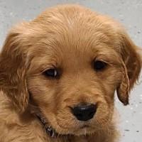 muddysharkpuppy avatar
