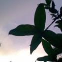Heerira's Photo