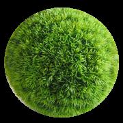 Homes Grass's avatar