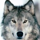 SilberWolf's Forum Avatar