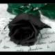 BlackRose16's avatar