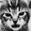 sadarex-avatar