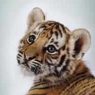 TigerHix