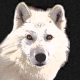 Profile picture of whitewolf1988