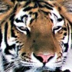 Profile picture of skeptiger
