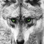 Profile picture of GreyWolf
