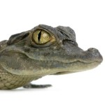 Profile picture of proper.croc