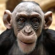monkeypie