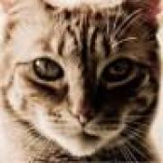 gildus's avatar