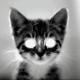 Akivara's avatar