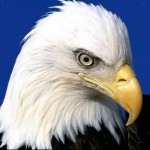 Profile picture of Eaglewings