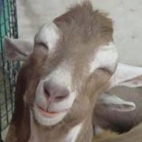Goat-on-a-Stick's avatar