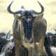 Profile photo of Gnu Atheist